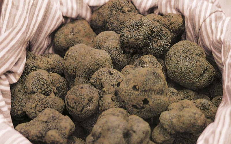 restaurant truffes